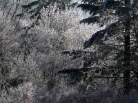 Mixed Tree Ice